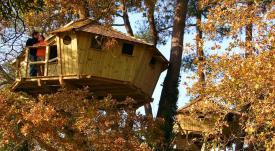Cabanes dans les arbres perchées à 8-10 mètres